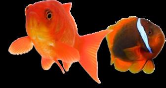 Virtual Pets: acquario