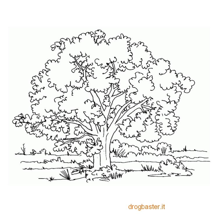 Disegni facili da colorare per bambini dell 39 asilo - Immagini da colorare della natura ...