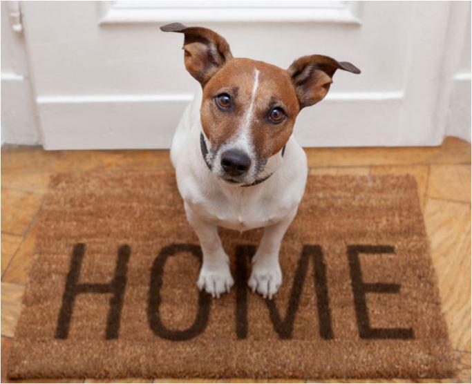 scegliere un cane per casa