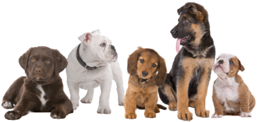 Elenco delle razze canine