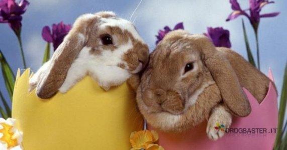 due coniglietti per la tua copertina facebook