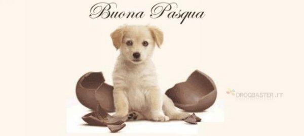 cover copertina gratis con cucciolo di cane e cioccolato