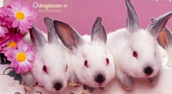 simpatici coniglietti  per le tue cover personalizzate
