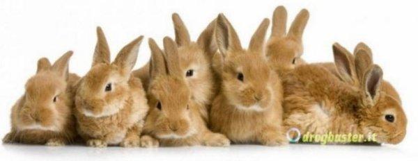 simpatici e teneri coniglietti per la copertina facebook