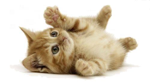 Virtual Pets gatto