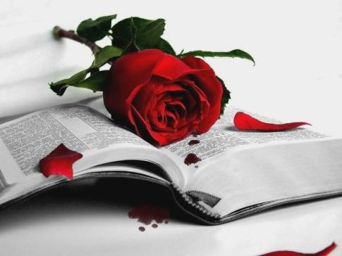 rosa rossa con libro immagine stupenda ricordo