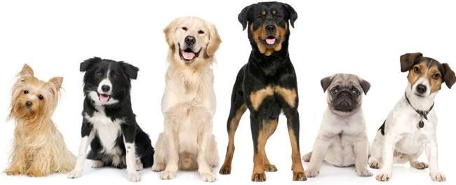 Calcola et del cane in anni umani for Tequila e bonetti cane razza