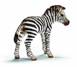 animali del racconto: zebra