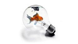 sfondo astratto pesce dentro una lampadina
