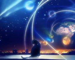 gatto osserva il cosmo