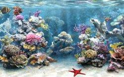fondale marino acquario