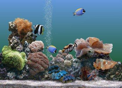 Classico sfondo acquario per pc desktop