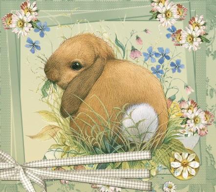 auguri coniglio pasqua