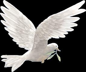 colomba bianca della pace