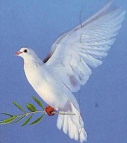 colomba pasqua