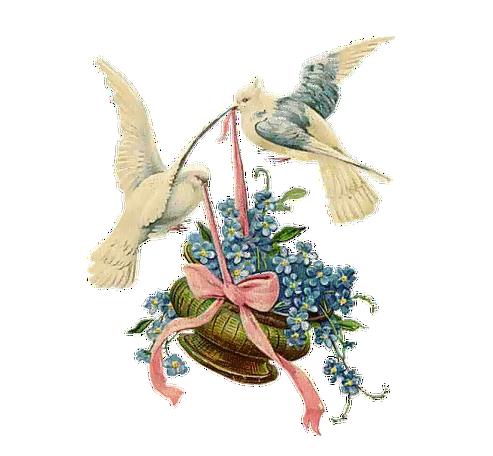 colomba con fiori augurio
