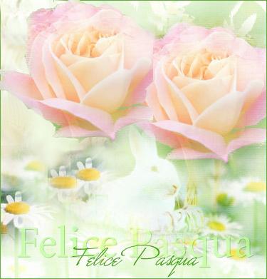 rose con auguri