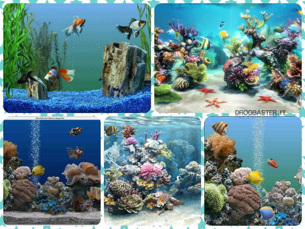 Screensaver acquario animato gratis for Sfondo animato pesci