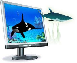 screensaver con delfini e squali acquario