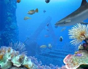 screenshot acquario