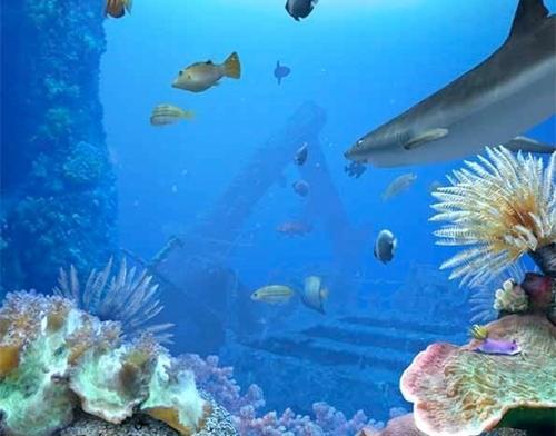 Acquario pc screensaver casamia idea di immagine for Sfondi animati pesci