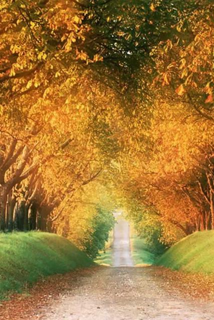 sfondo viale alberato autunnale