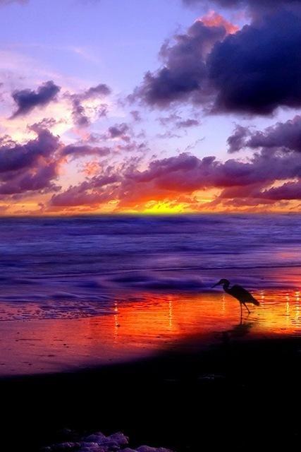 paesaggio tramonto mare spiaggia uccello