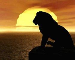 sfondo del Re leone al tramonto