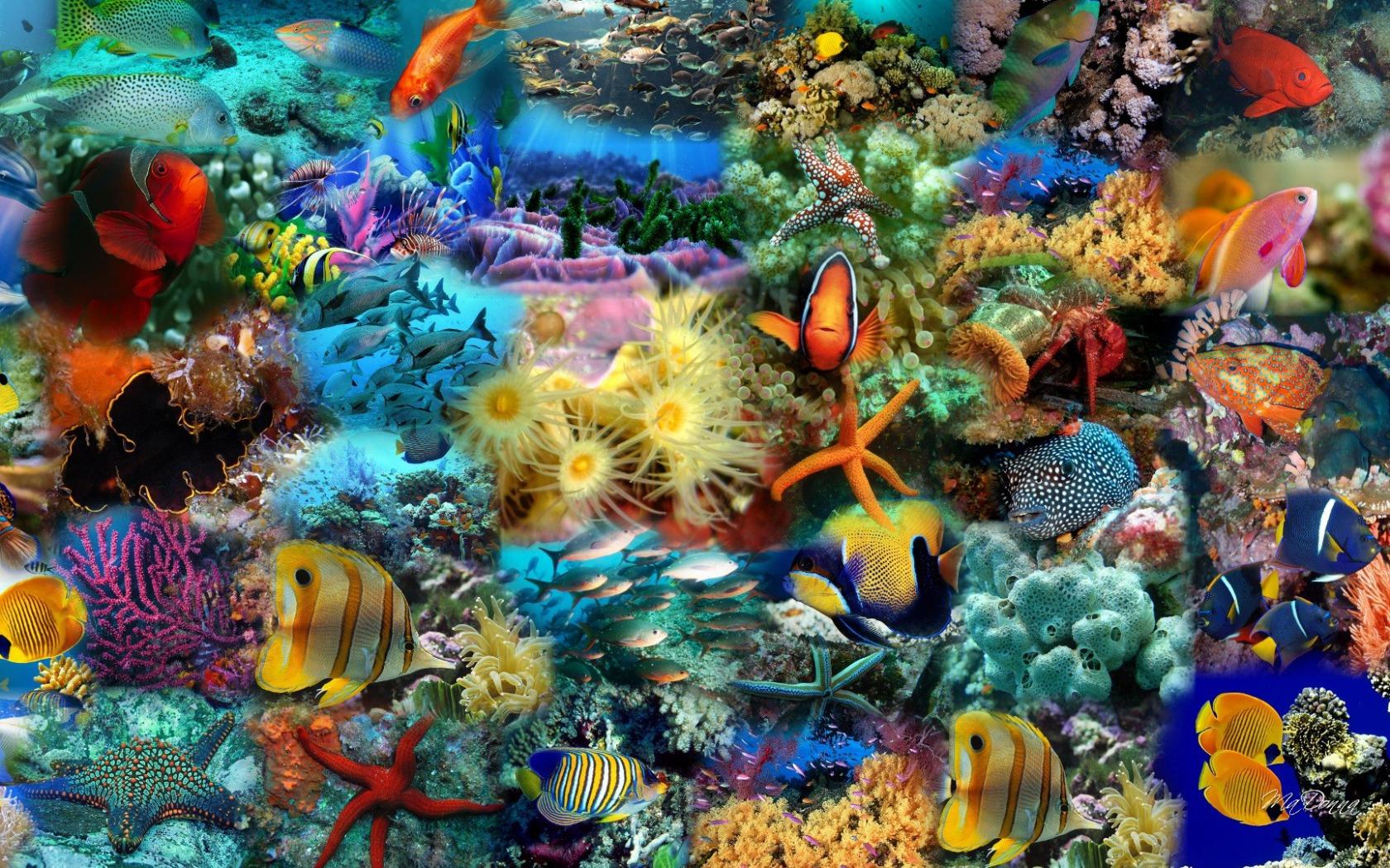 Sfondilandia immagini e wallpaper natura paesaggi e animali for Sfondo animato pesci