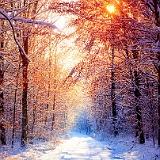 paesaggio invernale con alberi neve