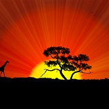 Wallpapers Africa Savana