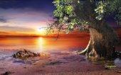 albero secolare al tramonto