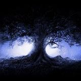 albero foresta