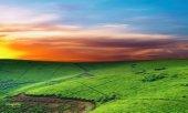 prato verde al tramonto