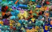 fondale marino con pesci