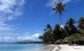spiaggia maldive con palme