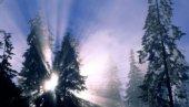 sorgere del sole attraverso i ramo dell'albero