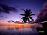 panorama natura con palma al tramonto