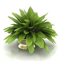 Immagini tridimensionali pianta67
