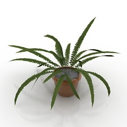 Felce pianta da esterno
