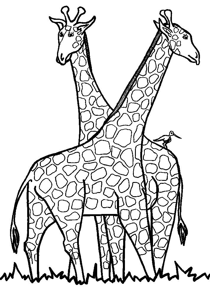 Giraffe Disegni Da Stampare E Colorare