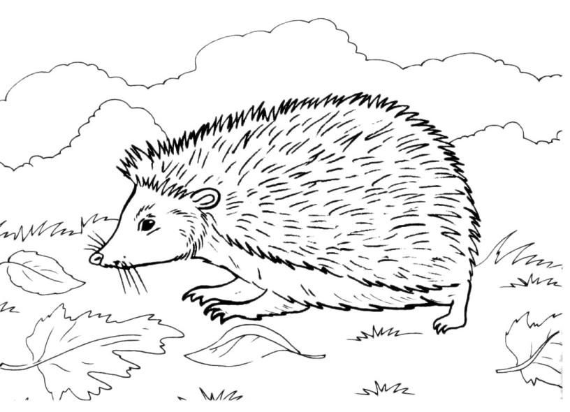 Disegno riccio da colorare per bambini - Animale domestico da colorare pagine gratis ...
