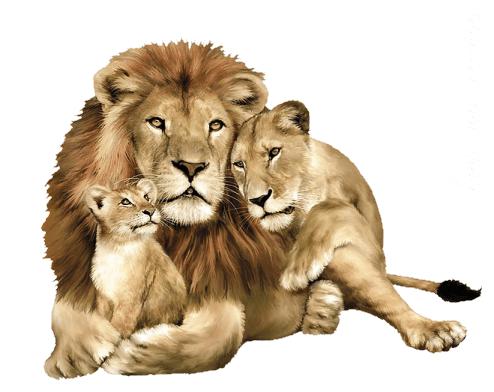 Leone Disegno Da Stampare E Colorare Per Bambini