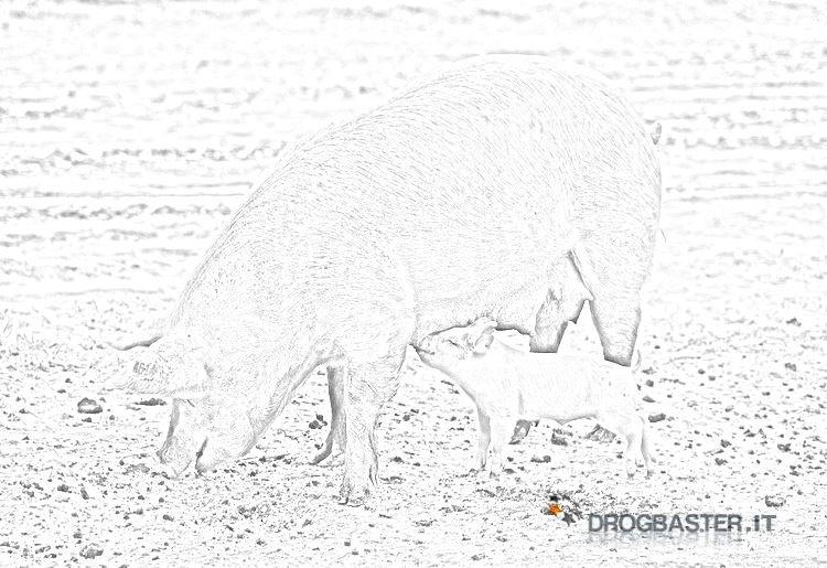 Pagine Da Colorare Di Maiali Download Disegni Di Maiali Da: Disegno Maiale 32 Animali Da Colorare