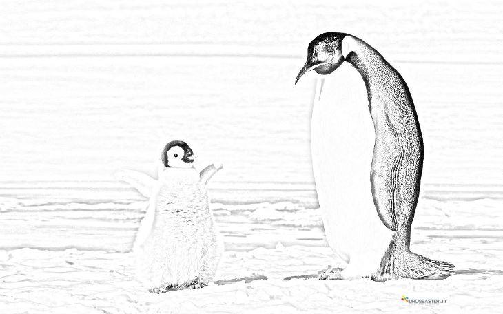 Pinguino Disegno Per Bambini Da Colorare
