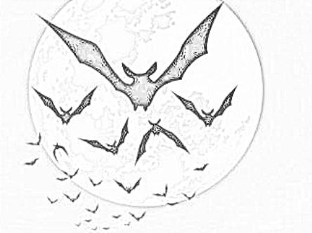 Disegni Da Colorare Pipistrelli.Pipistrello Disegni Per Bambini Da Colorare