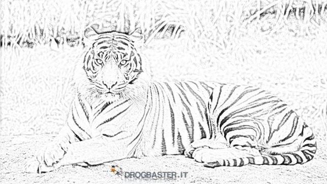 Tigre Disegni Per Bambini Da Colorare