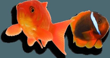 Pesci Disegni Da Stampare E Colorare
