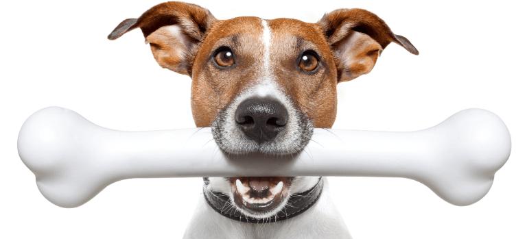 Cani disegni da stampare e colorare for Cane da colorare e stampare