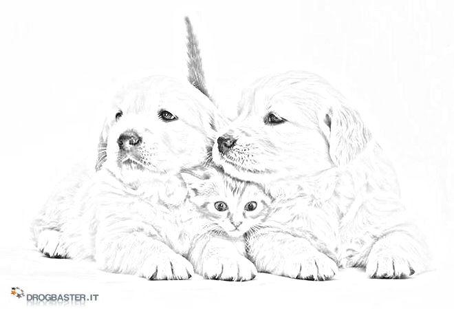 Foto Dei Cuccioli Da Stampare Immagini Da Colorare Pravreshcom